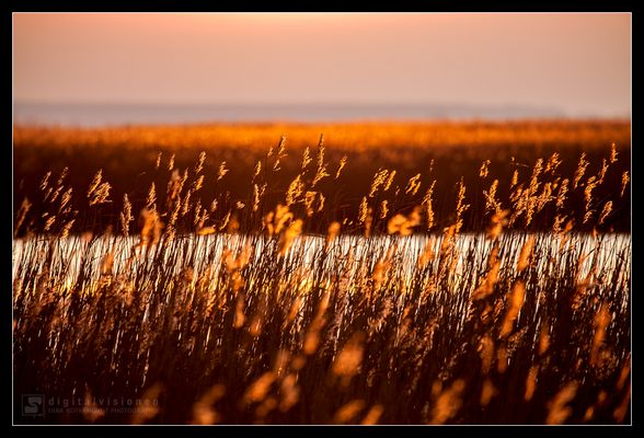 Sonnenuntergang auf dem Darß /3.
