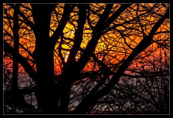Sonnenuntergang auf dem Darß /4.