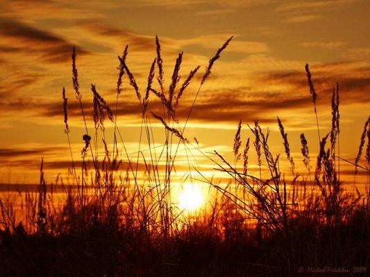 Sonnenuntergang auf dem Feld