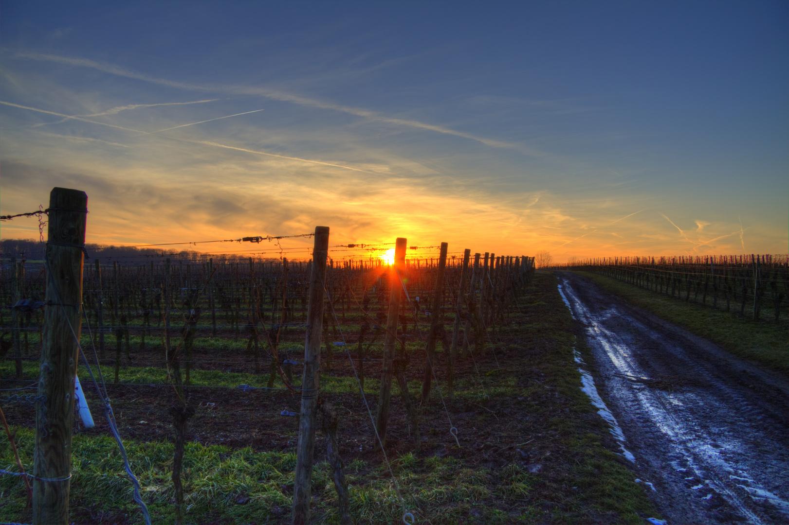 Sonnenuntergang auf dem Weinberg