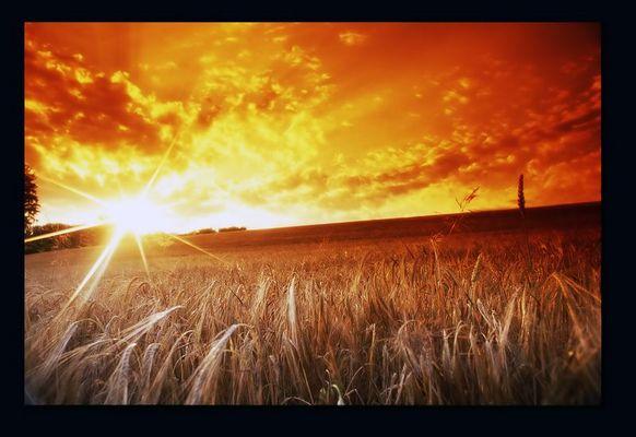 Sonnenuntergang auf der Kornwiese