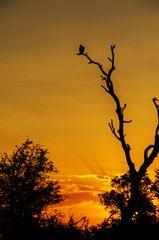 Sonnenuntergang auf der S 100