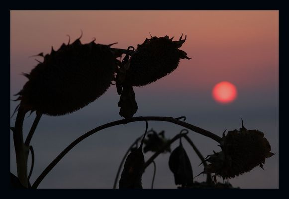 Sonnenuntergang auf Ikaria