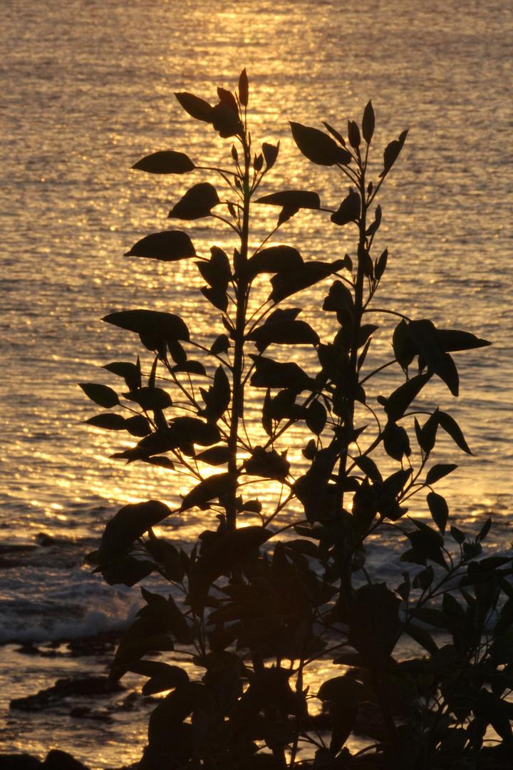 Sonnenuntergang auf Lanzarote 1