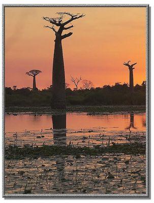 Sonnenuntergang bei der Baobab - Allee