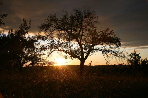 Sonnenuntergang bei Gomaringen
