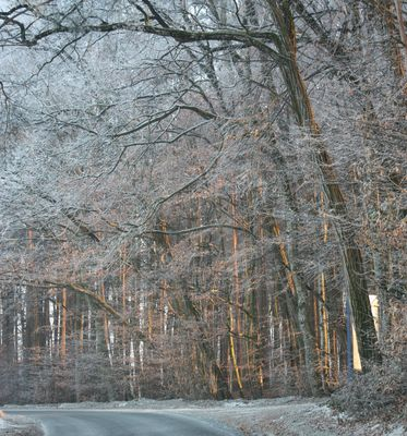 Sonnenuntergang durch den Wald