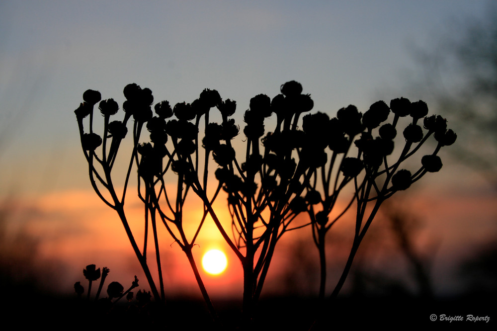 Sonnenuntergang durch die Blume gesehen