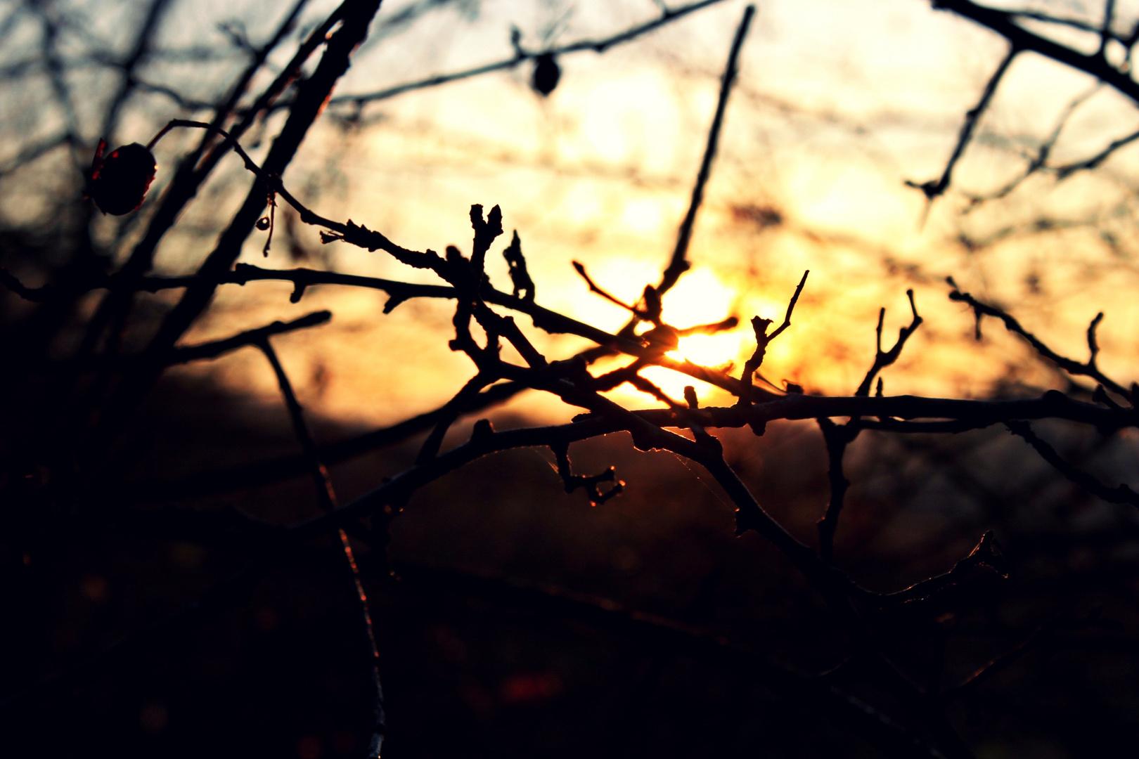 Sonnenuntergang durchs Geäst