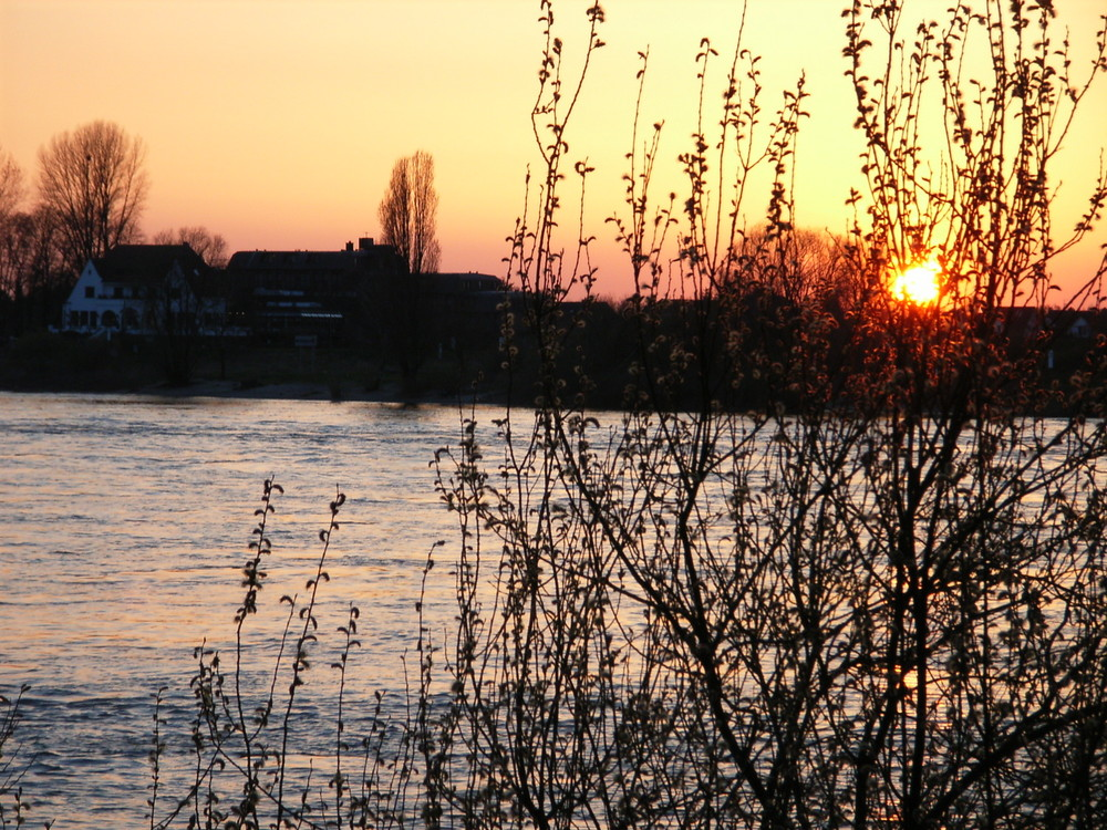Sonnenuntergang gegenüber Düsseldorf-Kaiserswerth