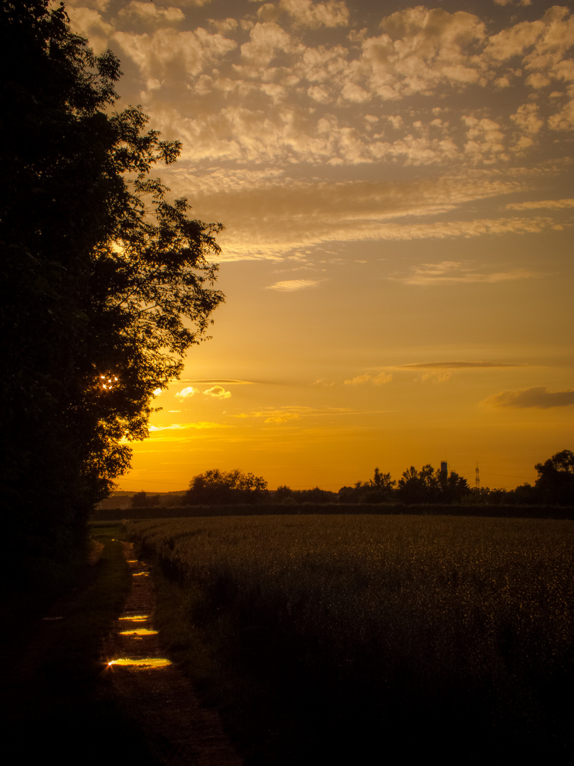 Sonnenuntergang Grafenrheinfelder Seen