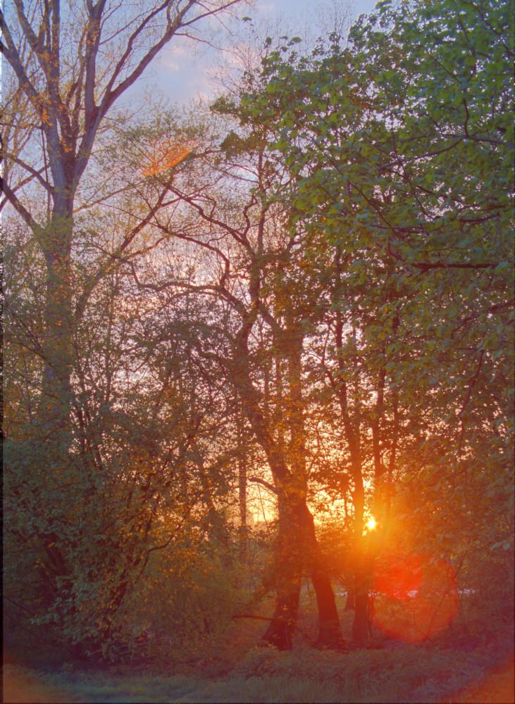 Sonnenuntergang hinter Baeumen