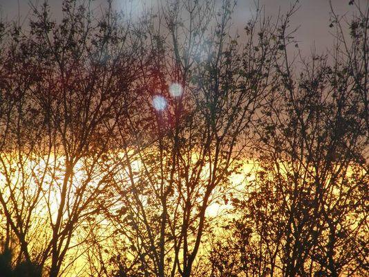 Sonnenuntergang hinter den Bäumen