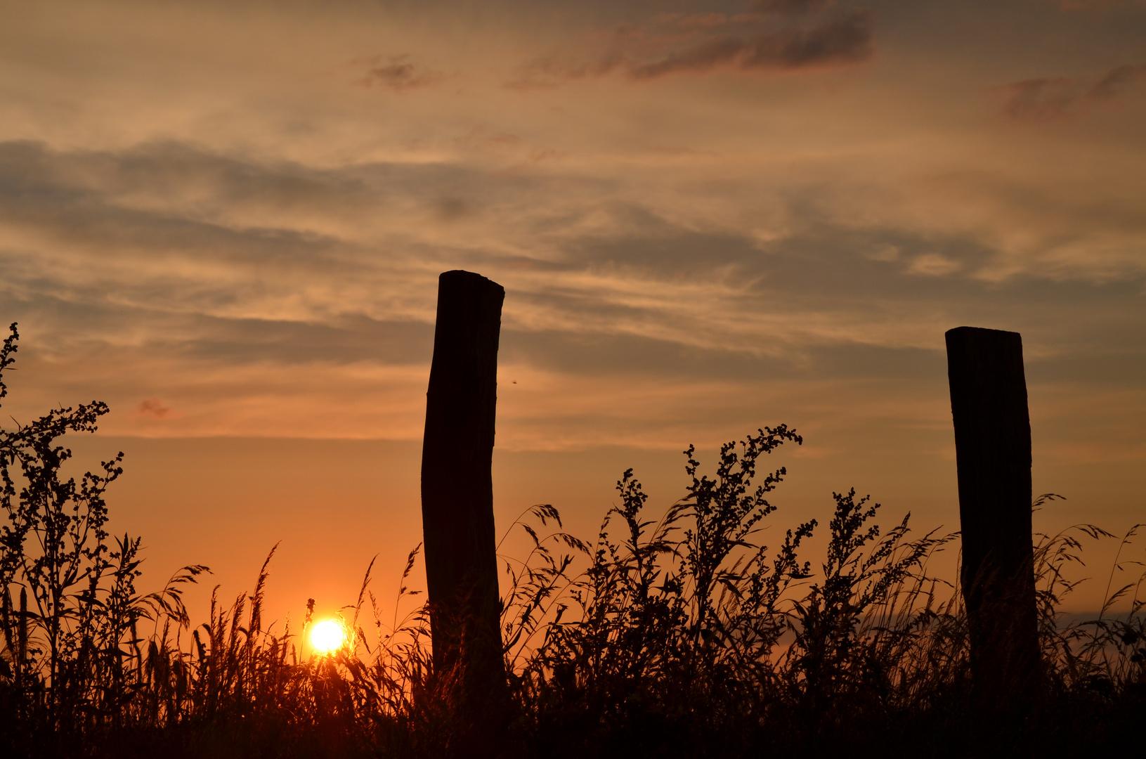 Sonnenuntergang hinter Feld und Pfosten