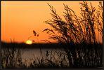 Sonnenuntergang hinter Gras