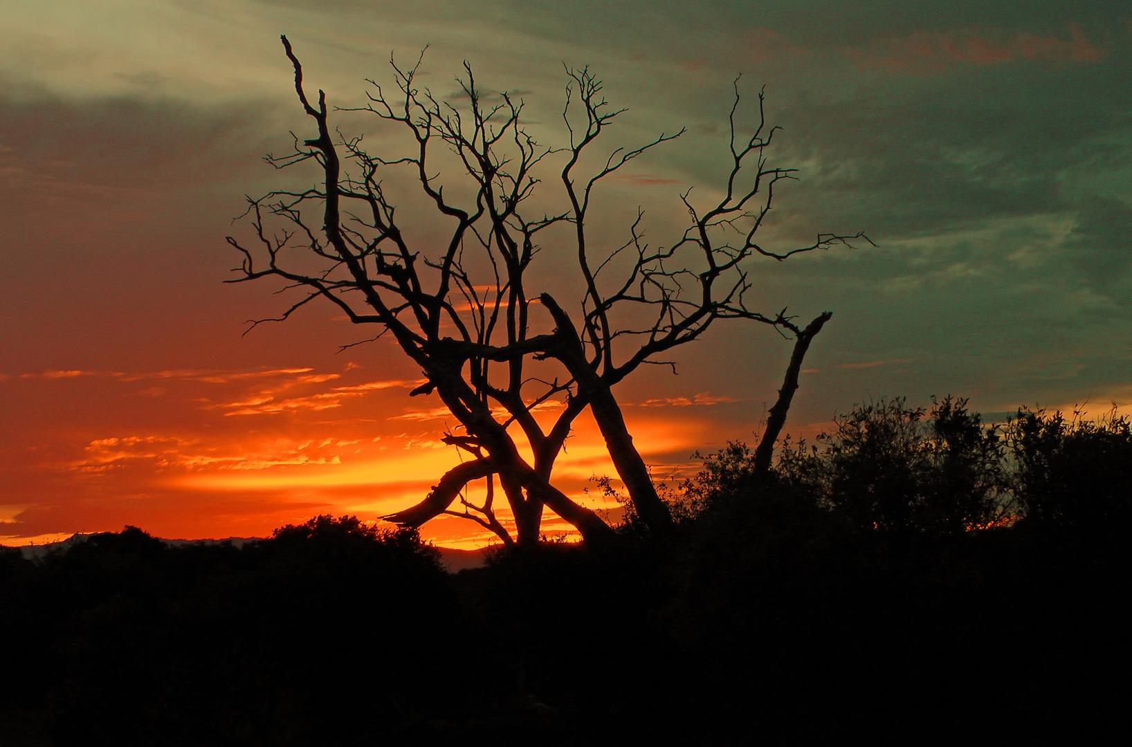 Sonnenuntergang im Amboseli NP
