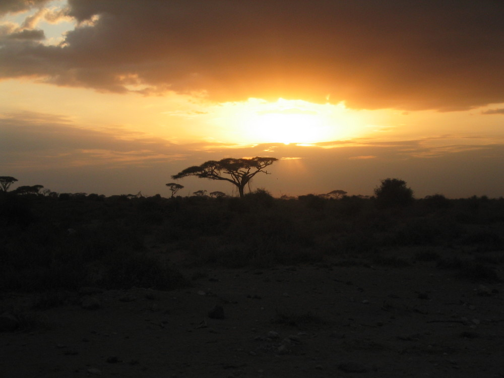 Sonnenuntergang im Amboseli-Park