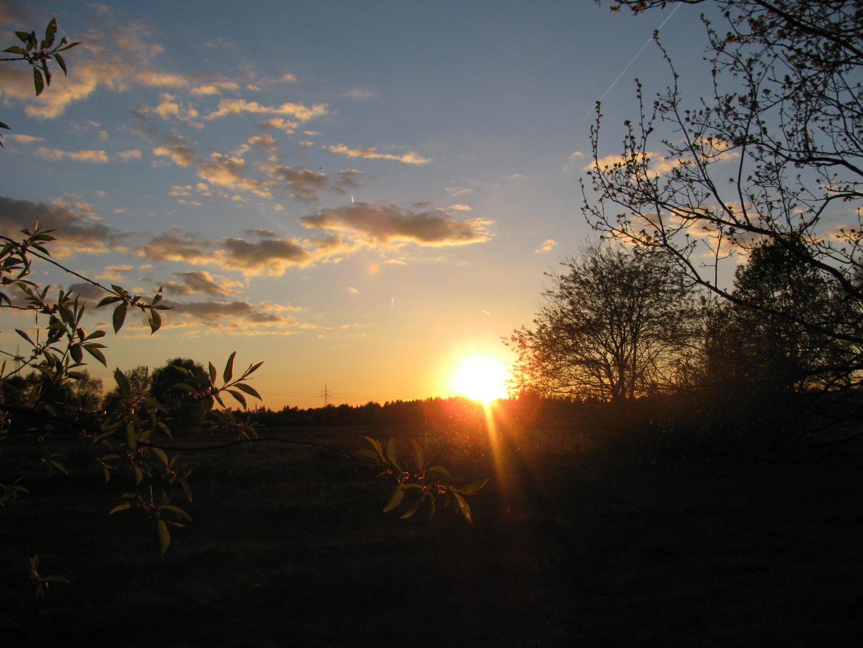 Sonnenuntergang im Augenwald