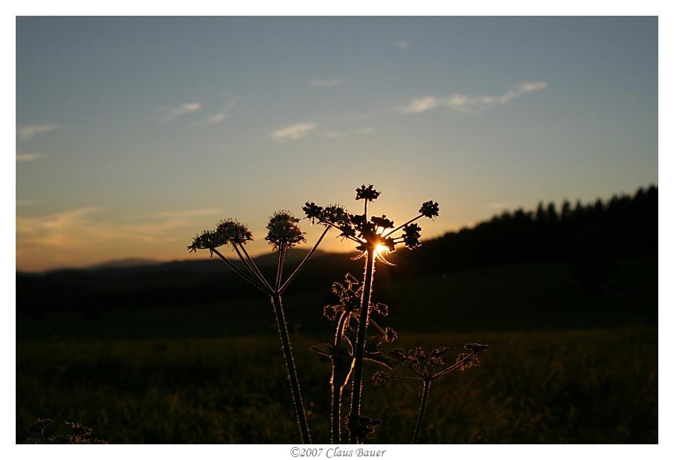 Sonnenuntergang im Bayerischen Wald