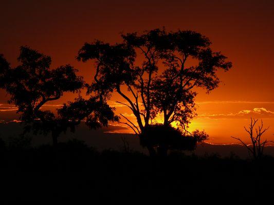 Sonnenuntergang im Chobe NP