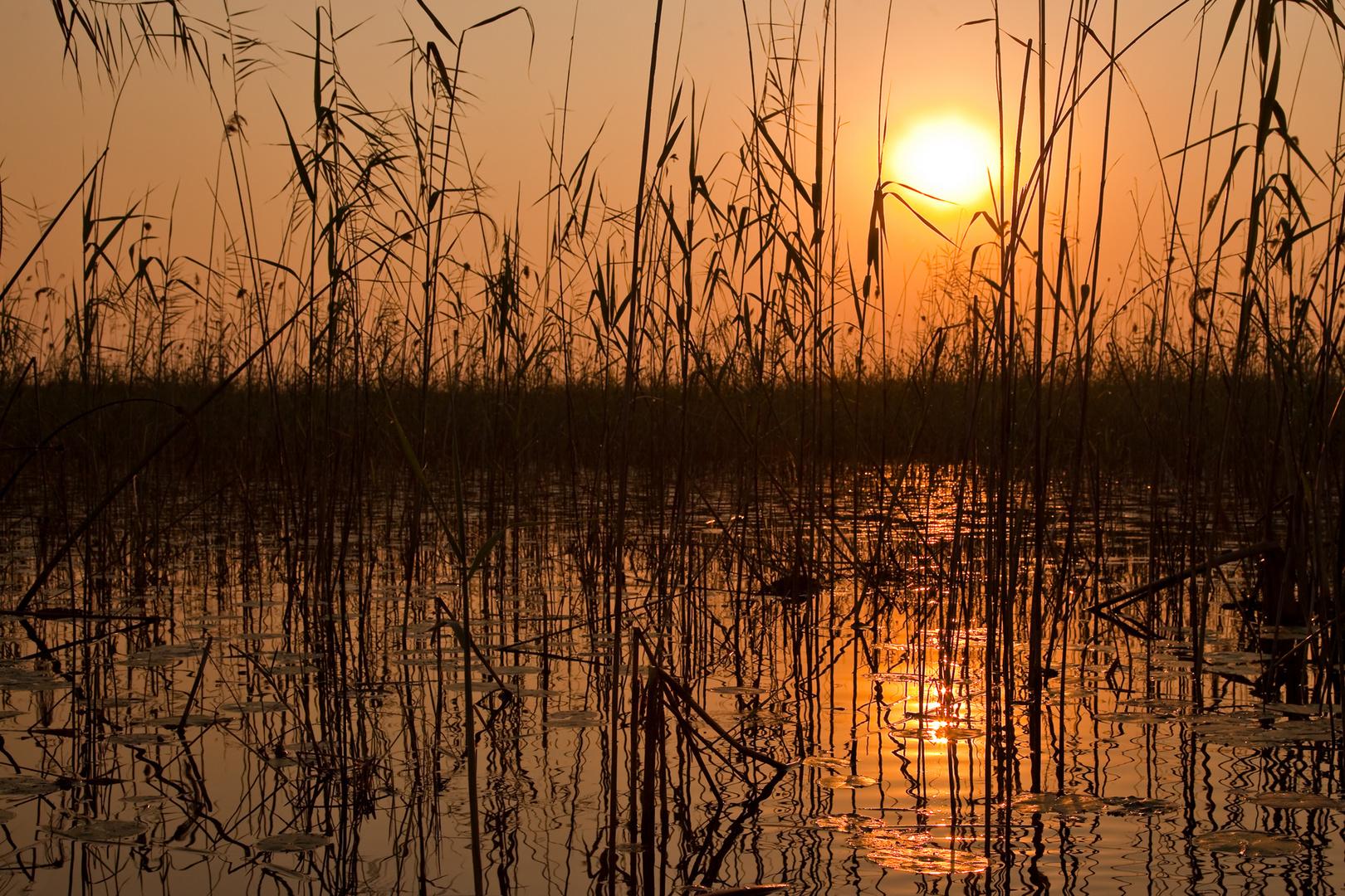 Sonnenuntergang im Delta
