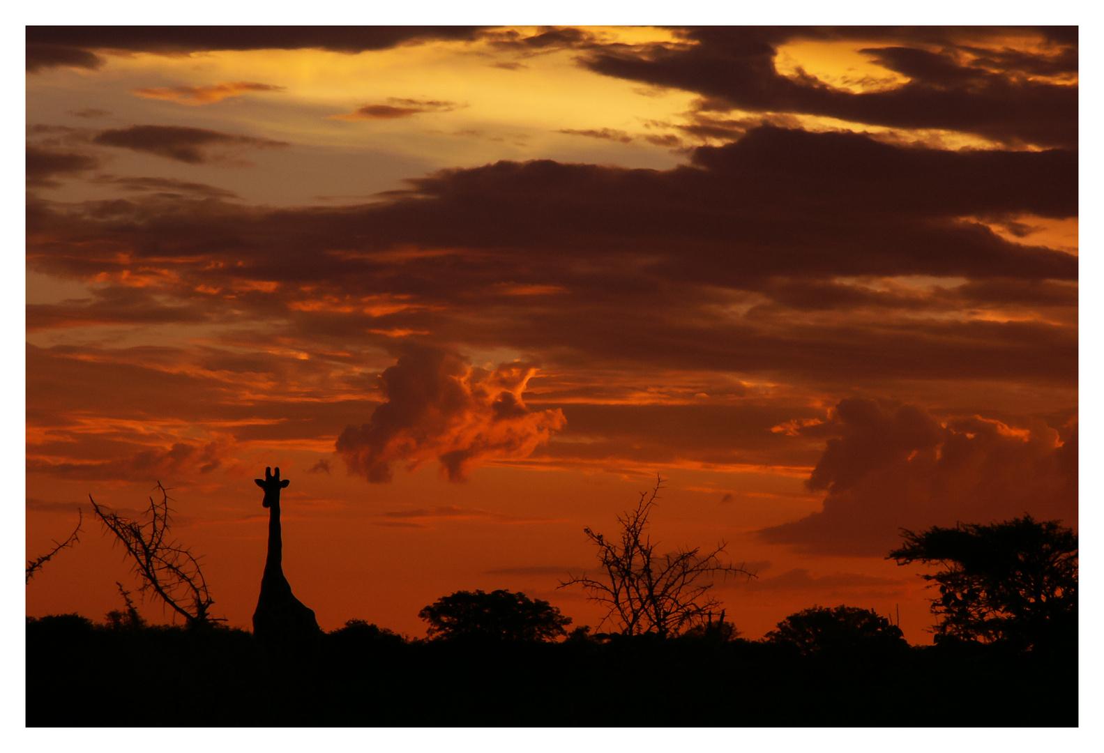 Sonnenuntergang im Etosha National Park, Namibia