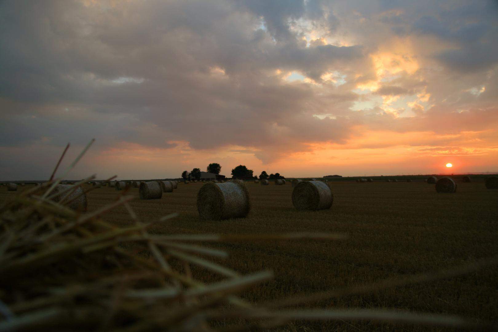 Sonnenuntergang im Feld