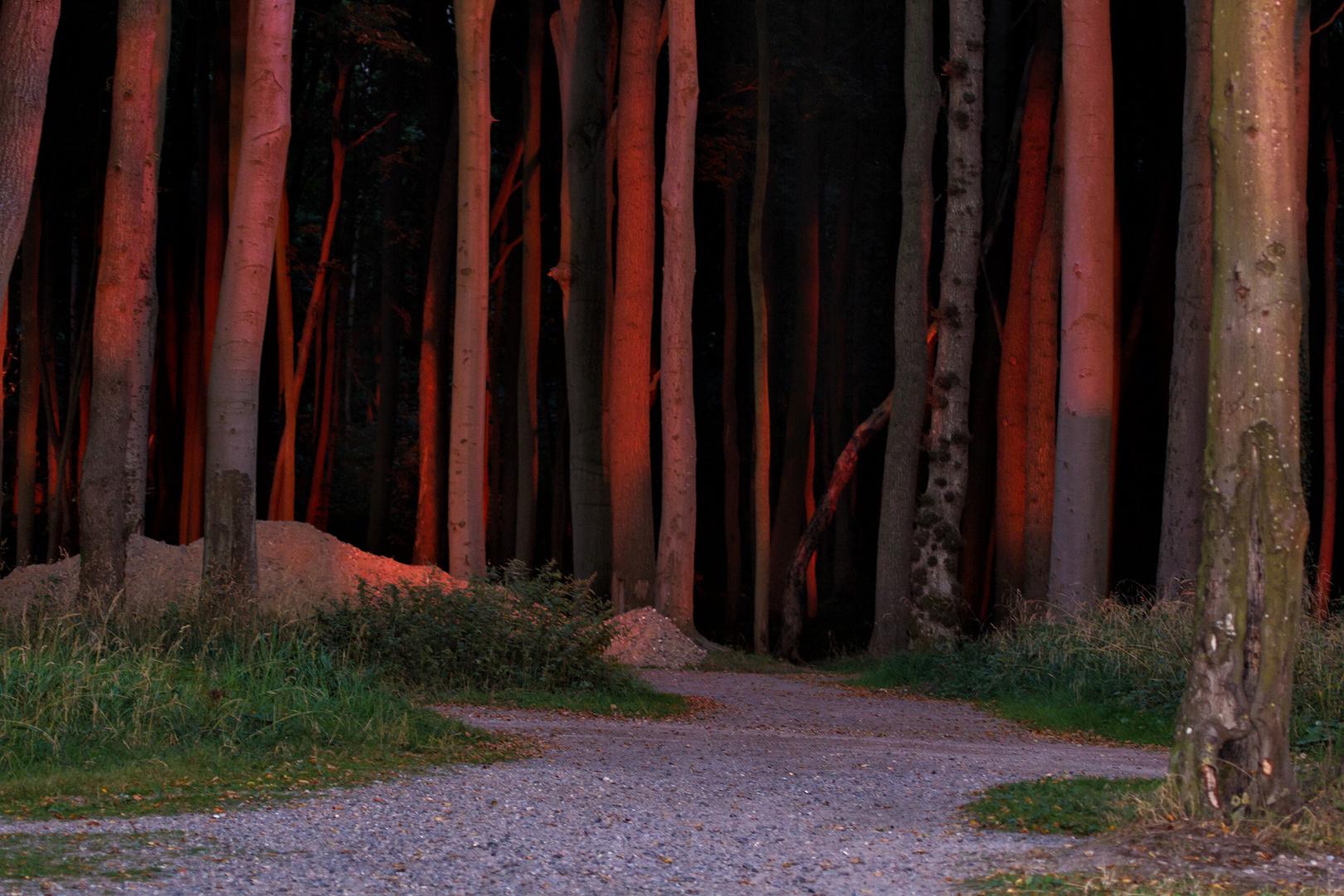 Sonnenuntergang im Gespensterwald (Warnemünde)