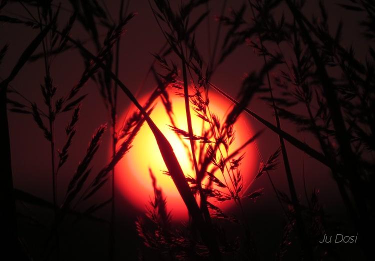 Sonnenuntergang im Getreidefeld