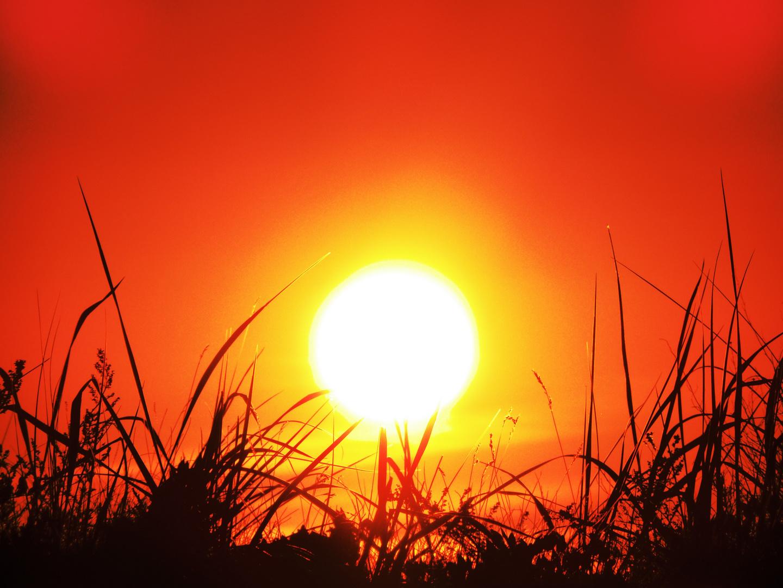 Sonnenuntergang im Gras I