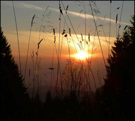 Sonnenuntergang im Harz (Stieglitzeck)