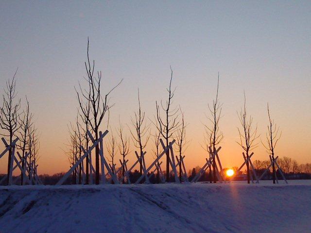 Sonnenuntergang im Hasenfeld