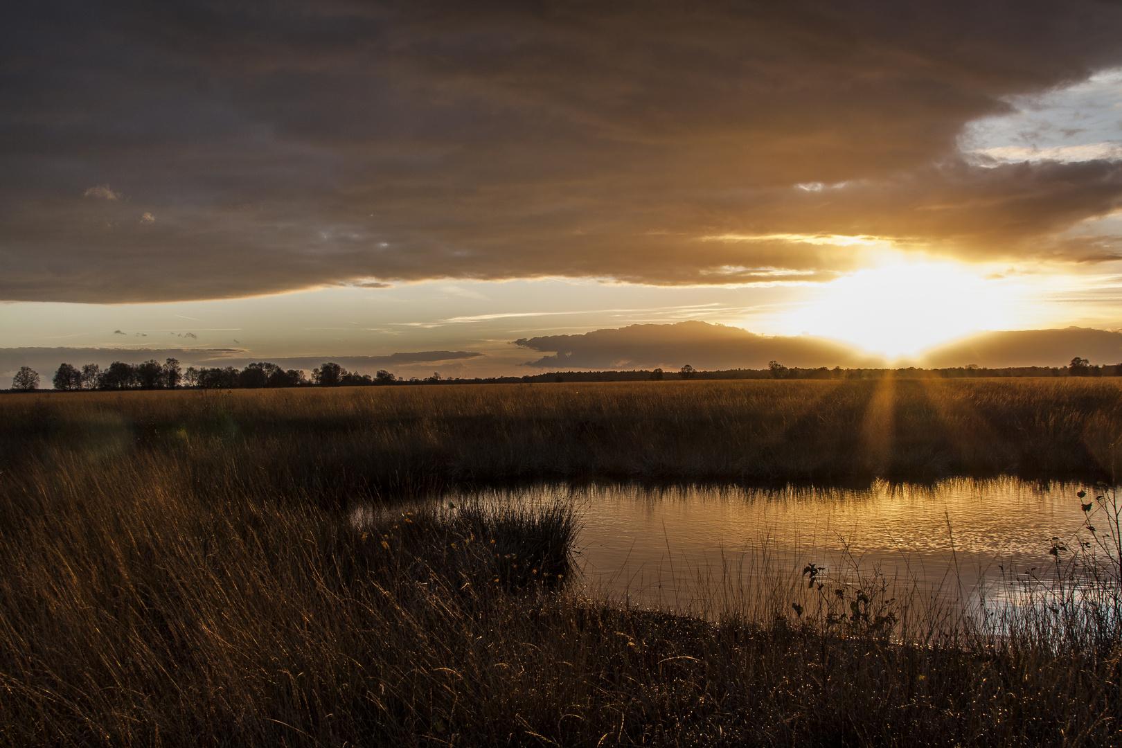 Sonnenuntergang im herbstlichen Moor