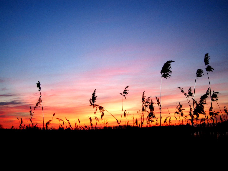 Sonnenuntergang im Naturschutzgebiet