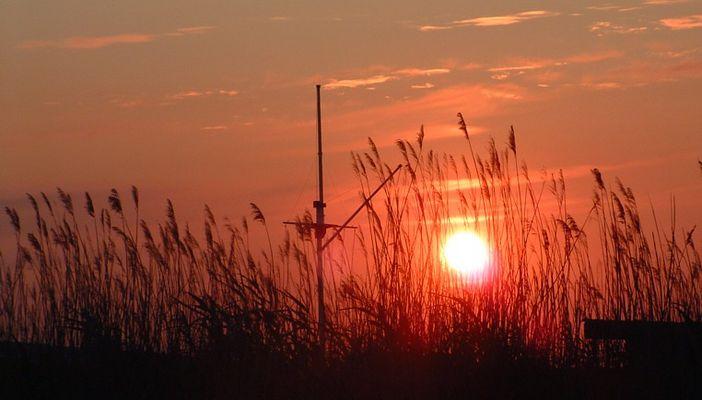 Sonnenuntergang im Schilfgürtel des Neusiedlersees