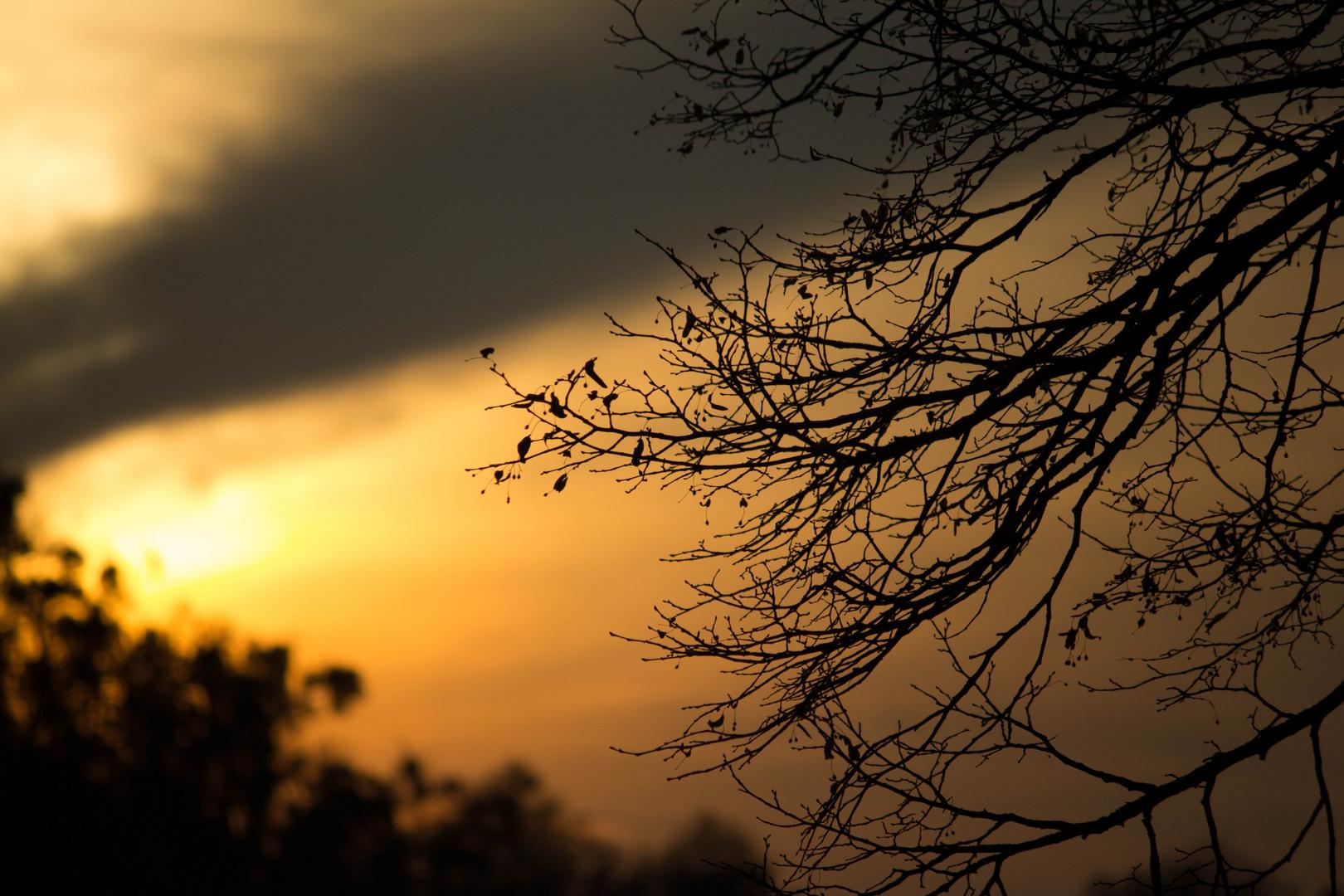 Sonnenuntergang im Schloßpark Nymphenburg