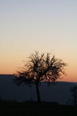 Sonnenuntergang im Schwarzwald / Zavelstein