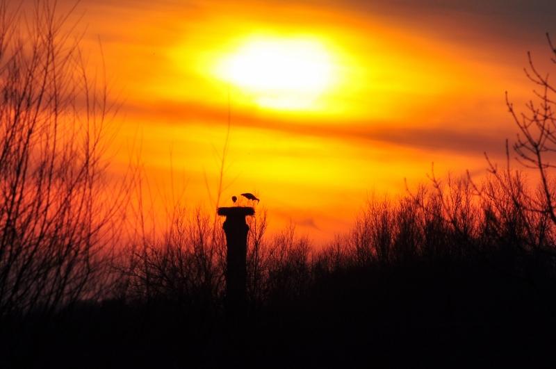 Sonnenuntergang im Storchenland in der Hammer Lippeaue.