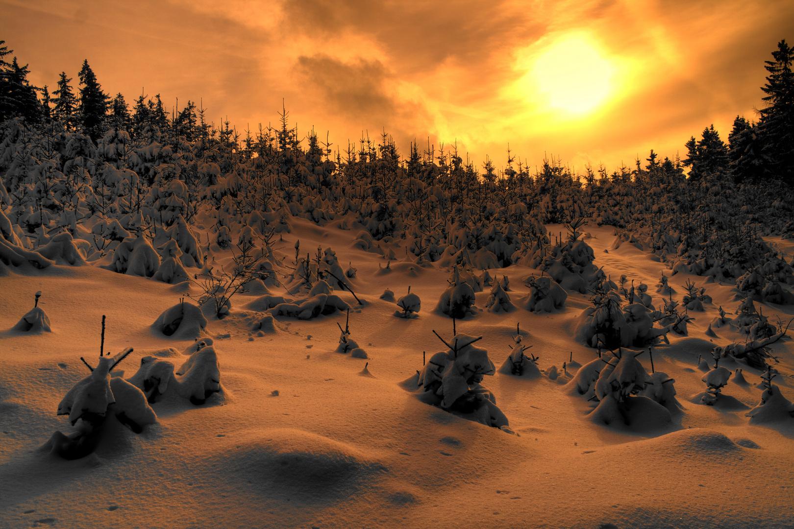 ~ Sonnenuntergang im Thüringer Wald ~