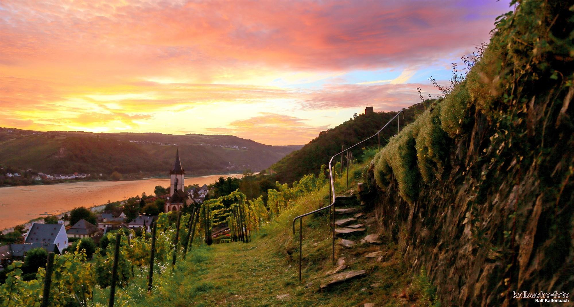 Sonnenuntergang im Weltkulturerbe-Wingert Lorch am Rhein