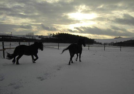 *Sonnenuntergang im Winter*