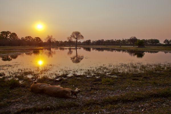 Sonnenuntergang in Afrika...