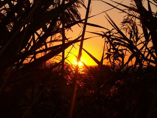 Sonnenuntergang in den Feuchtwiesen