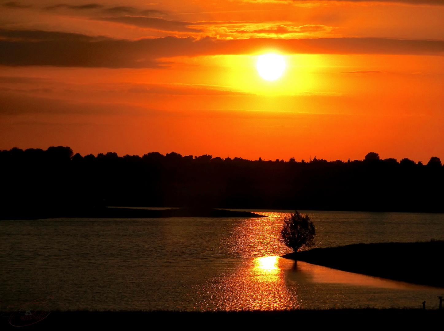 Sonnenuntergang in den Rheinauen