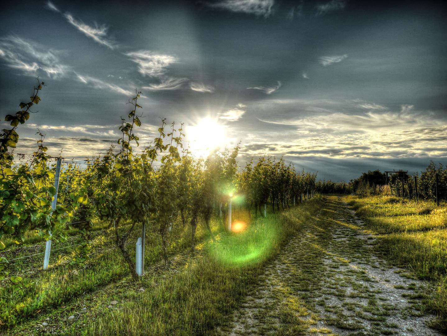 Sonnenuntergang in den Weinbergen Bad Kreuznach