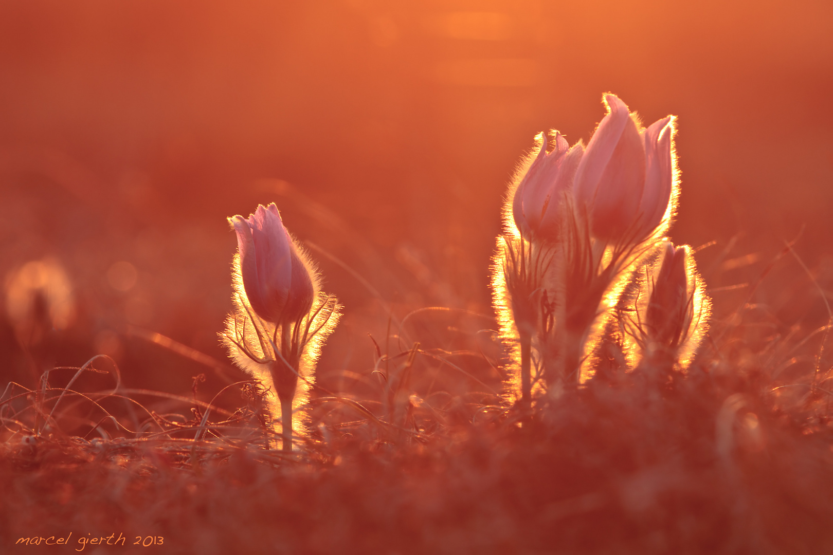 Sonnenuntergang in der Garchinger Heide