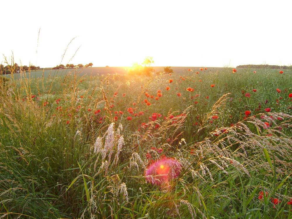 Sonnenuntergang in der Gemeinde Saara bei Altenburg