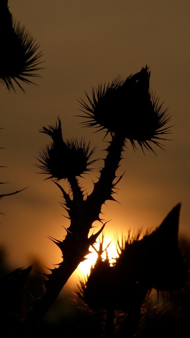 Sonnenuntergang in der Prärie