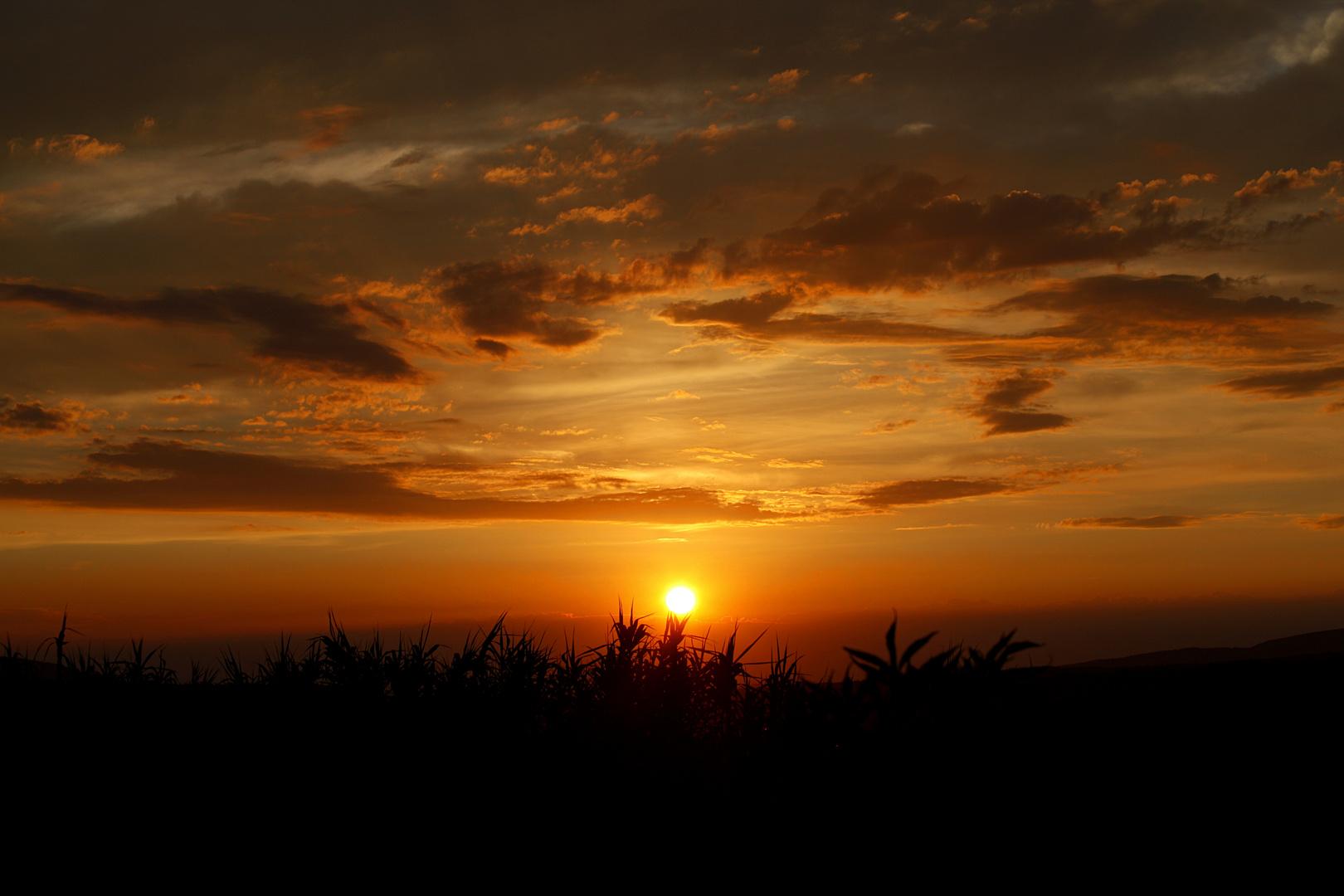 Sonnenuntergang in der Provence (2)