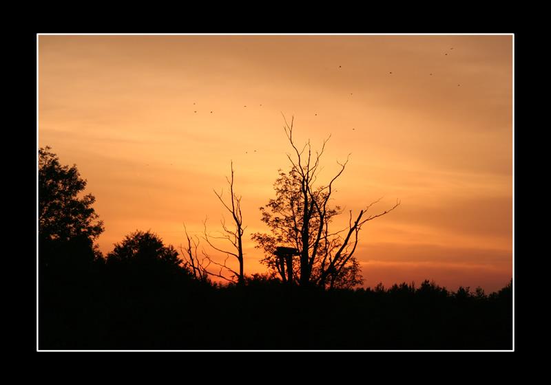 Sonnenuntergang in der Puszta